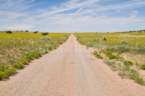 Dirt road Stock photo © disorderly
