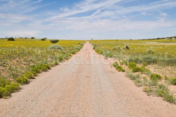 Toprak yol sarı kır çiçekleri giriş park yol Stok fotoğraf © disorderly