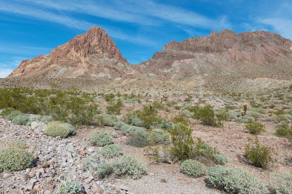 ルート66 アリゾナ州 砂漠 古い サボテン ストックフォト © disorderly