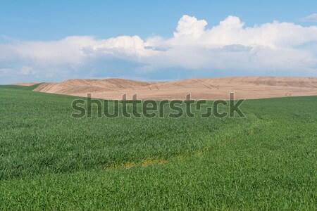 Stodoła pola pszenicy dziedzinie budynków rolnictwa Zdjęcia stock © disorderly