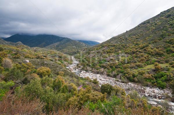 Sekwoja parku trzy California krajobraz Zdjęcia stock © disorderly