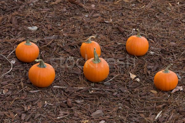 Tökök miniatűr erdő padló narancs ősz Stock fotó © disorderly