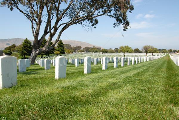 Military cemetery Stock photo © disorderly