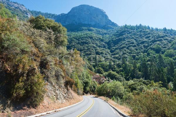 Sekwoja parku autostrady trzy California Zdjęcia stock © disorderly