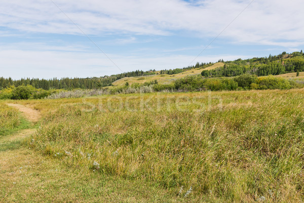 Hills Stock photo © disorderly