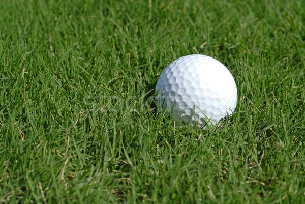 Pelota de golf hierba pelota blanco juego Foto stock © disorderly