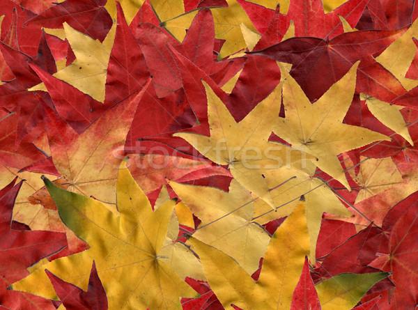 Hojas de otoño azulejos sin costura fondo hojas Foto stock © disorderly