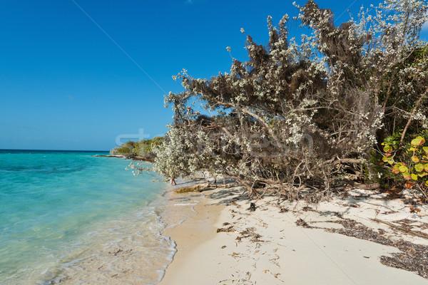 Beach Stock photo © disorderly