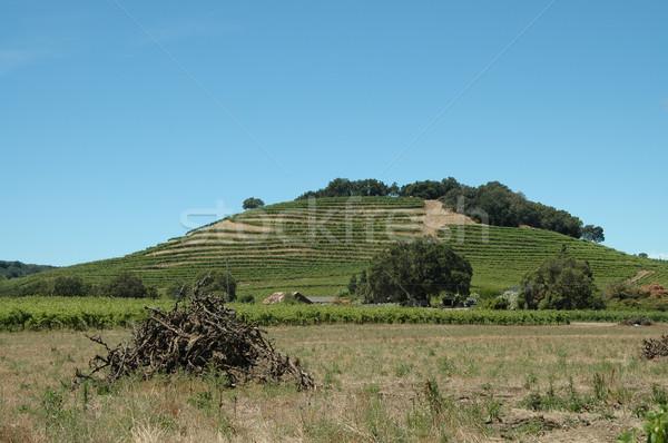 Domboldal szőlőskert mezőgazdaság szőlő gazdálkodás Stock fotó © disorderly