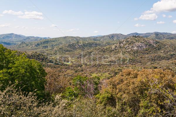 пейзаж секвойя парка барсук Сток-фото © disorderly