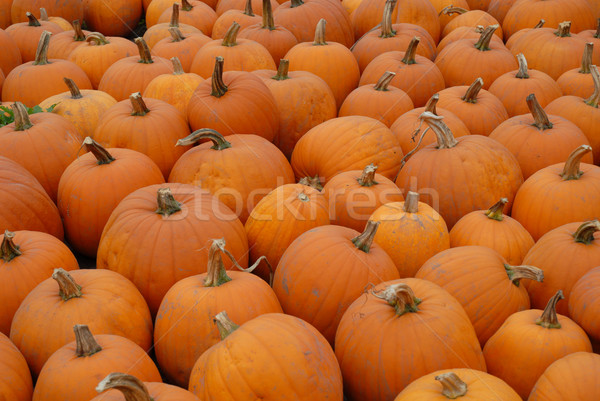 Pumpkins Stock photo © disorderly