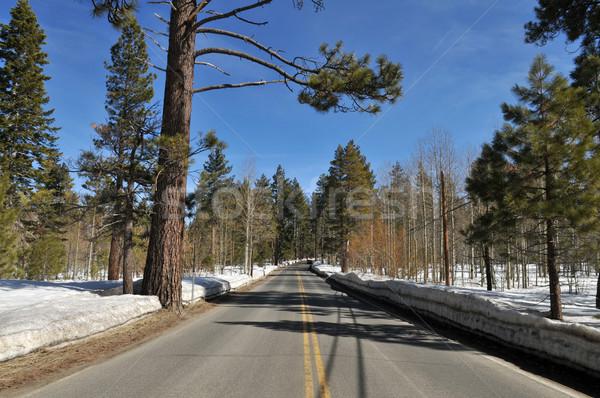 Winter road Stock photo © disorderly