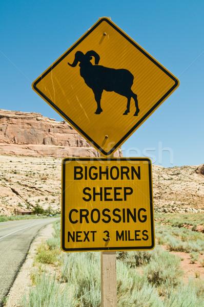 Bighorn Sheep Crossing Stock photo © disorderly