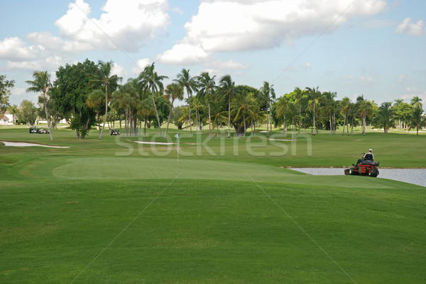 Campo da golf erba Miami Florida golf alberi Foto d'archivio © disorderly