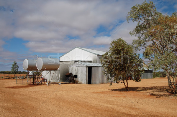 Bovini stazione south australia acqua farm Foto d'archivio © disorderly