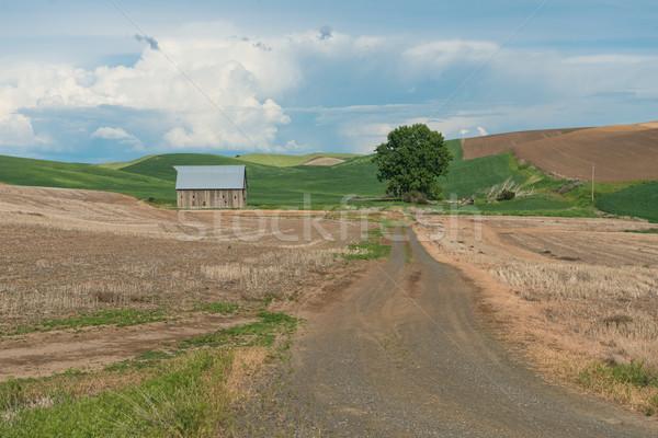 Boerderij schuur velden boom gebouw Stockfoto © disorderly