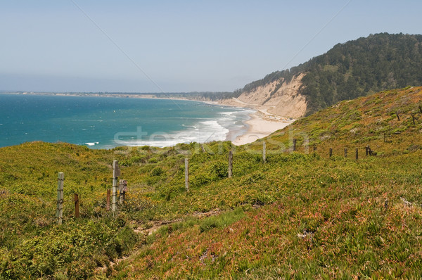 Pacific coast Stock photo © disorderly