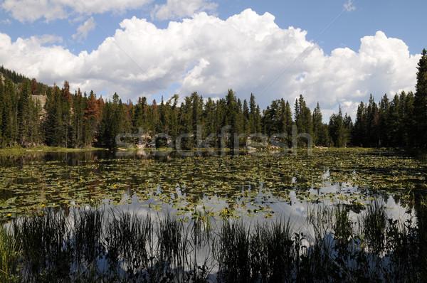 Nymph Lake Stock photo © disorderly