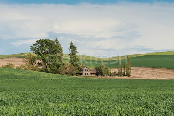 Farmhouse Stock photo © disorderly
