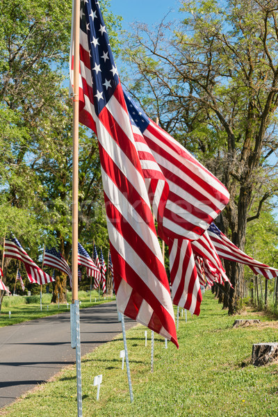 Memorial Day flags Stock photo © disorderly