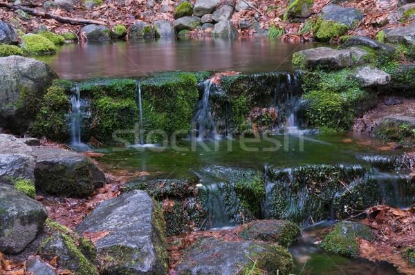 シダ 春 ヨセミテ国立公園 カリフォルニア 滝 公園 ストックフォト © disorderly