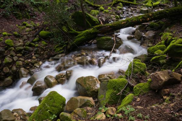 Kaskada wody skał kanion parku Zdjęcia stock © disorderly