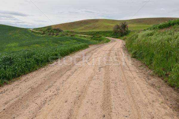 Onverharde weg tarwe velden weg boerderij vuil Stockfoto © disorderly
