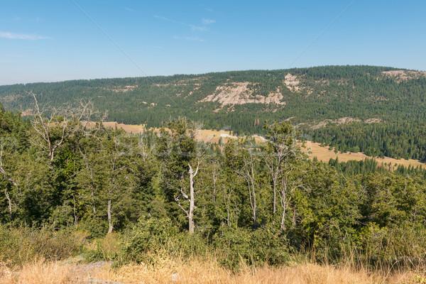 Foto stock: Lacuna · Nevada · montanhas · Califórnia · floresta · árvores