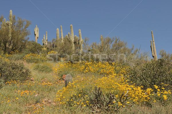Cactus Stock photo © disorderly