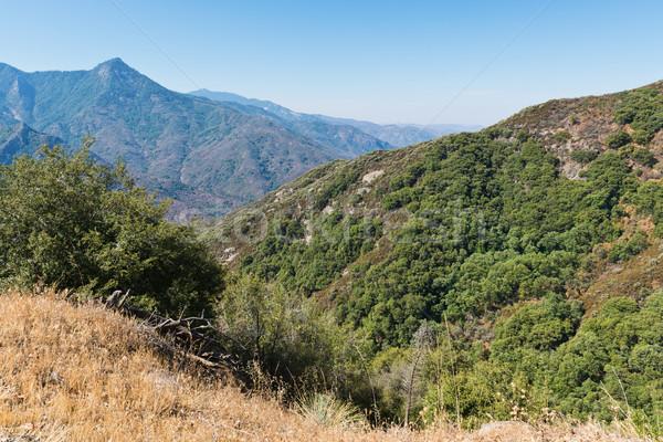 Sekwoja parku trzy California Zdjęcia stock © disorderly