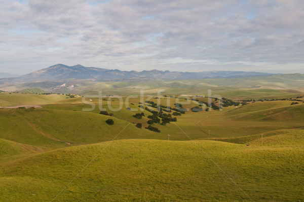 Rolling hills Stock photo © disorderly