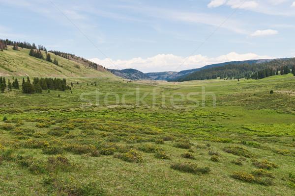 Alpesi völgy déli Colorado erdő tájkép Stock fotó © disorderly