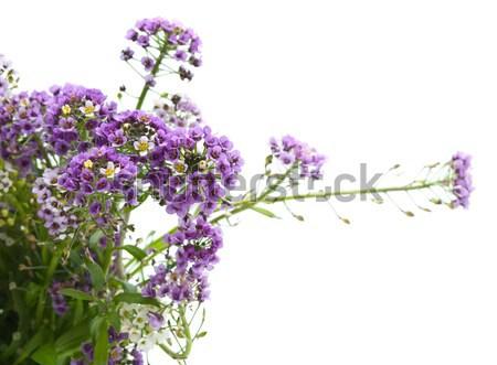 çiçekler beyaz bahar doğa yeşil hediye Stok fotoğraf © djemphoto