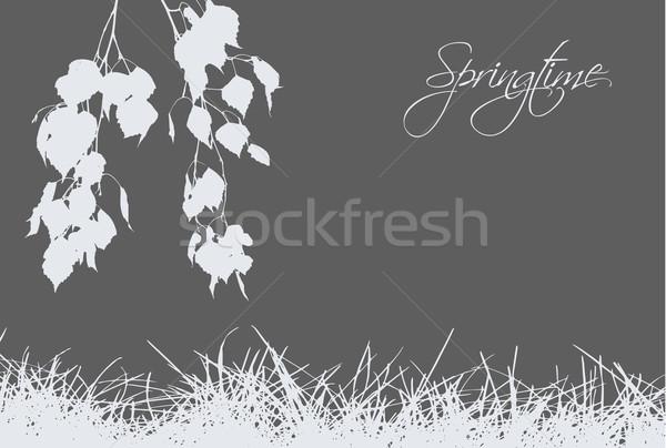 Trawy brzozowy szary tle kwiat Zdjęcia stock © djemphoto
