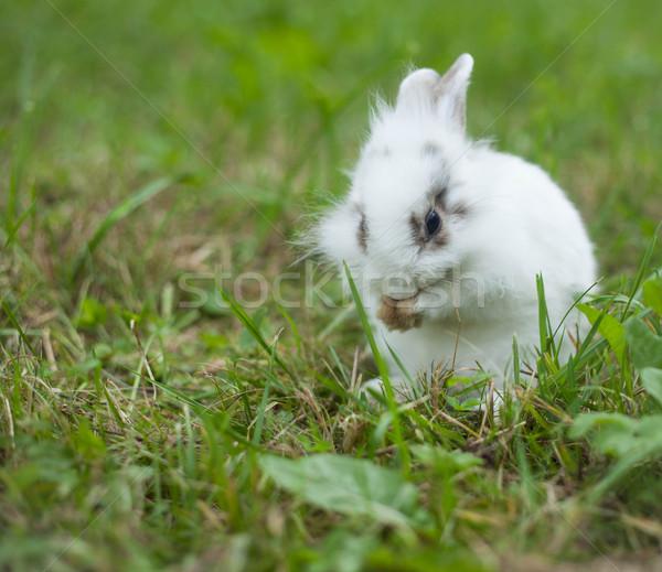 Konijn gras baby natuur goud eten Stockfoto © djemphoto