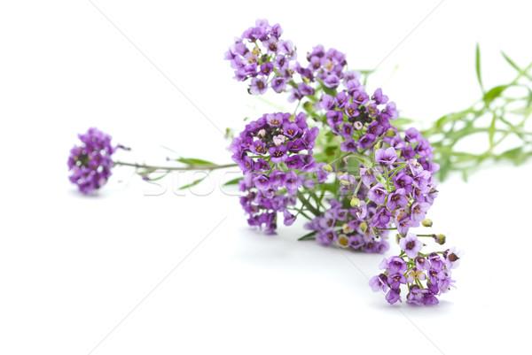 Virágok fehér tavasz természet zöld ajándék Stock fotó © djemphoto