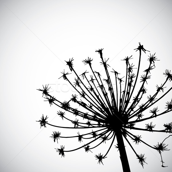 Vektor vad gyógynövény esernyő virág Stock fotó © djemphoto