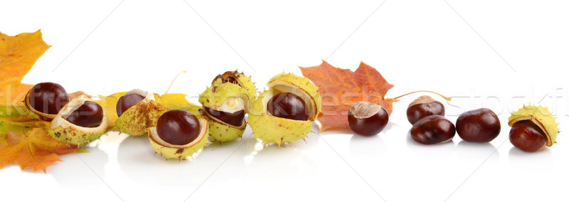 Group of many chestnuts in line with autumn leaves Stock photo © dla4