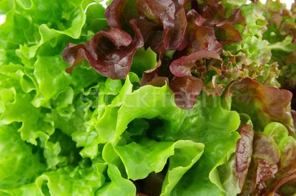 Many varieties of lettuce wallpaper Stock photo © dla4