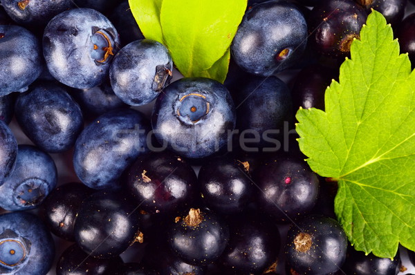 Closeup view blueberries and blackcurrants leaves background  Stock photo © dla4