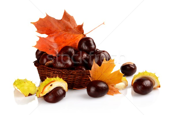 Mand bladeren geïsoleerd witte Stockfoto © dla4