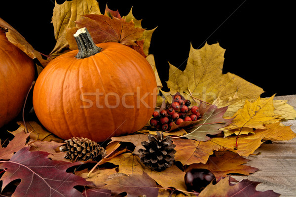 Pumpkin with autumn leaves for thanksgiving day on black backgro Stock photo © dla4