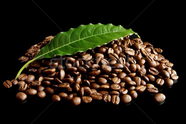 Collected coffee beans with leaf on black Stock photo © dla4