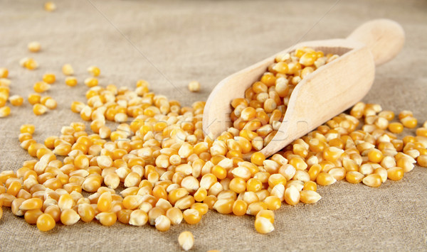 Scattered dried corn with scoop on wooden plank Stock photo © dla4