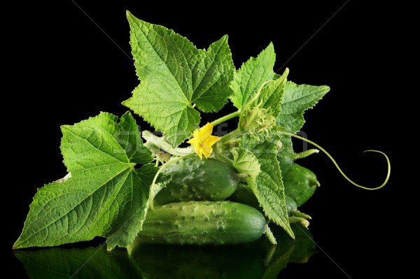 Few fresh raw gherkins with flower isolated on black Stock photo © dla4