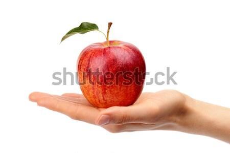 Stúdiófelvétel piros alma levél kéz izolált fehér Stock fotó © dla4