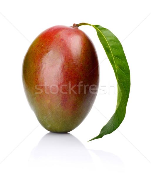Stúdiófelvétel egy egész mangó levél izolált Stock fotó © dla4