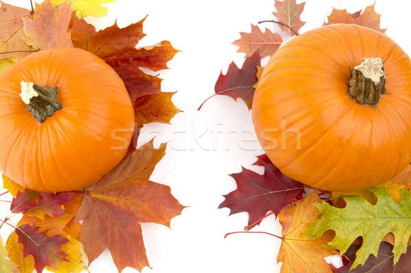 Decoración calabazas hojas de otoño acción de gracias día blanco Foto stock © dla4