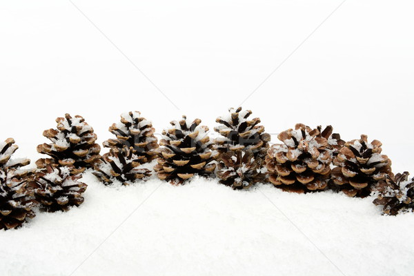 Many christmas pine cones on snow in line Stock photo © dla4
