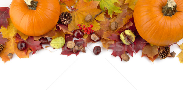 At the top pumpkins with autumn leaves for thanksgiving day Stock photo © dla4